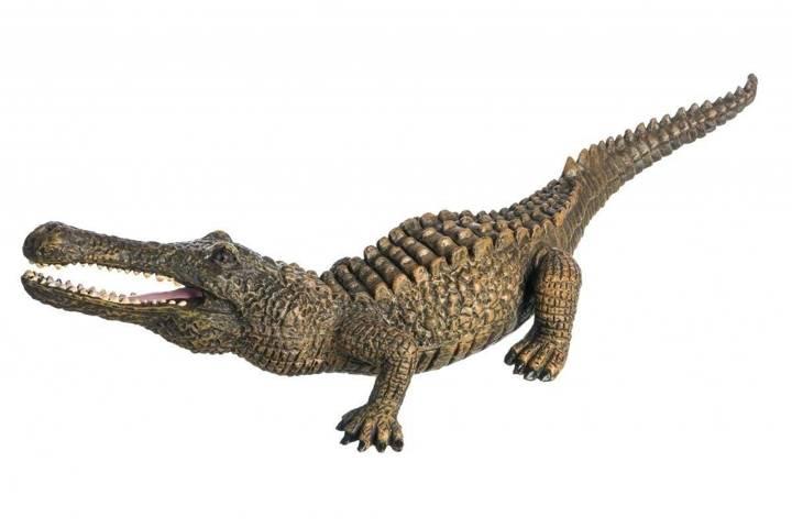 Krokodyl samiec